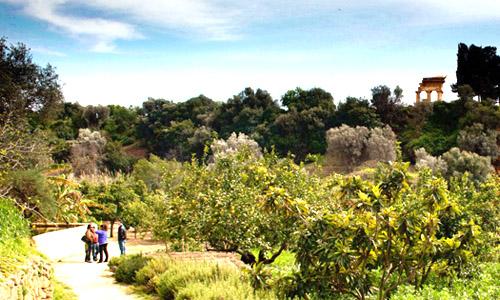 Kolymbethra a portata di clic il giardino si visita for Articoli giardino on line